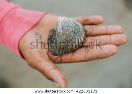 Fisherman hand holding a clam or Giant Cockle