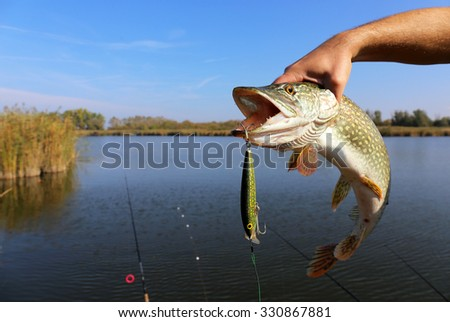 fisherman hand holding pike with bait - stock photo