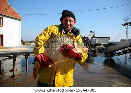 Fisherman Holding a Big Fish. Fishing Industry. Portrait of fisherman with big carp fish in his hands at fish farm. - stock photo