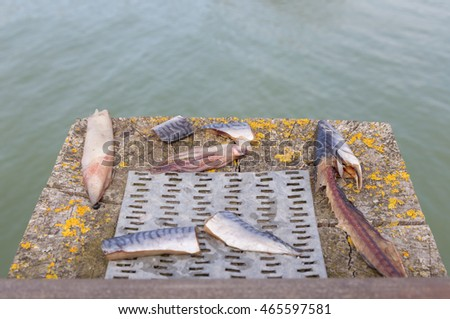 Fisherman's bate selection. Taken at Newhaven near the ferry showing a selection of bate.