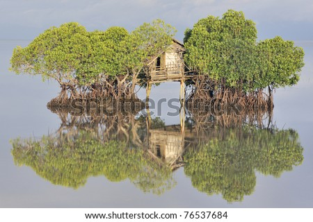 Fisherman's hut and reflection in calm sea among mangrove trees at sunrise