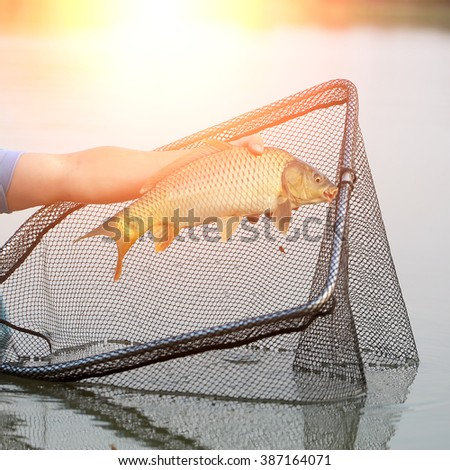Fisherman using  dip net for freshwater fishing catching on pond closeup male hand holding one big fish in sun rays on natural background, horizontal picture  - stock photo