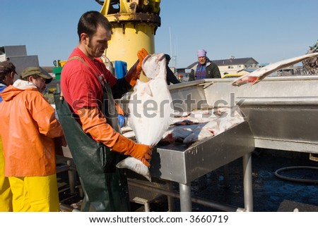 Fisherman weighing the catch at Homer, Alaska harbor