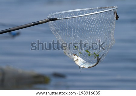 Fisherman with the landing net - stock photo