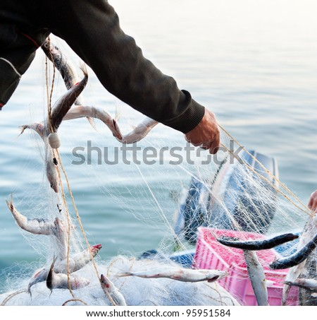 fishers hands take a net with fish