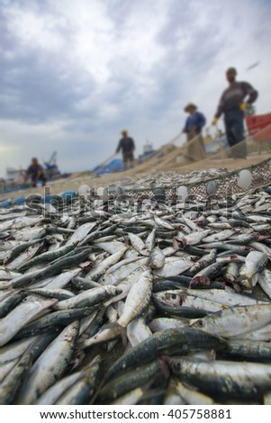 Fishers take fish out of a net - stock photo