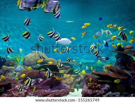 Fishes and coral, underwater life - stock photo