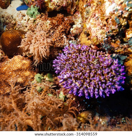 Fishes and Sea Bottom of Ecosystem of Tropical Coral Reef - stock photo