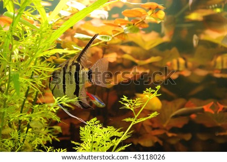 Fishes and seaweed - stock photo