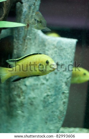 Fishes and shovel in water. Aquarium