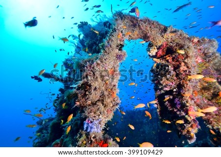fishes at wreck - stock photo