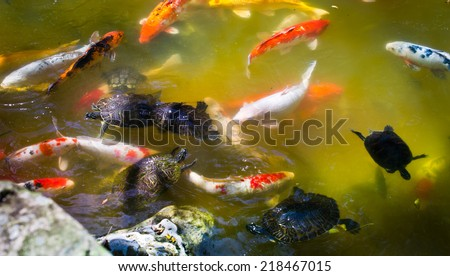 Fishes in a Japanese pond. Miami, USA. - stock photo