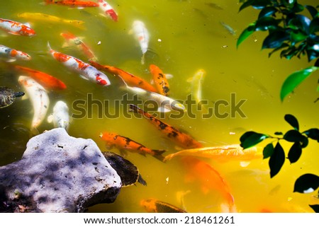 Fishes in a pond in a Japanese garden. Miami, USA. - stock photo