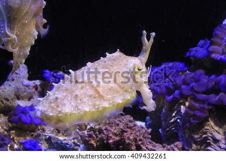 fishes in acquarium - stock photo