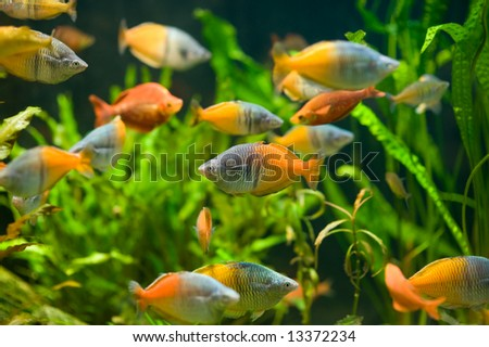 Fishes in aquarium - stock photo