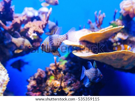 Fishes in aquarium. shallow deep field