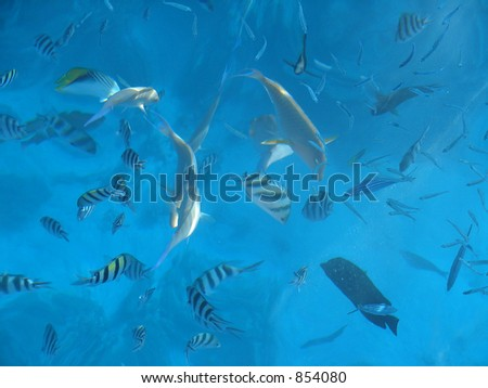 fishes in blue sea