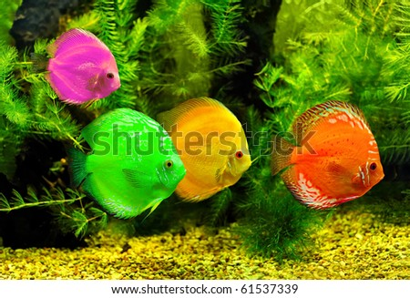 Fishes in different color in water - stock photo