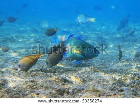 Fishes of Red Sea