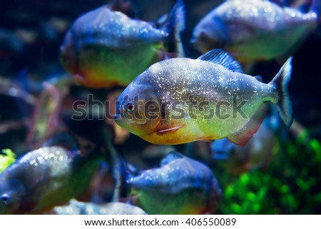 Fishes swimming in tanker. - stock photo