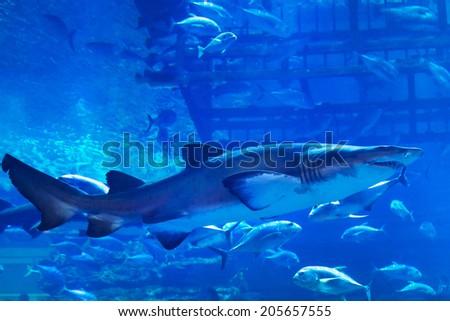 Fishes underwater in natural aquarium - stock photo
