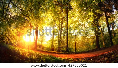 Fisheye landscape shot of a footpath in the forest at sunset, with the foliage shining gold in the warm sunlight - stock photo