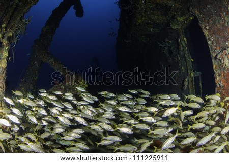 fisheye view of the inside of USCG Cutter Duane in Key Largo, Florida with giant school of yellowtail snappers - stock photo