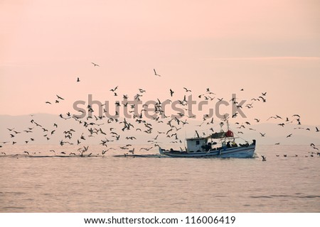 Fishing boat followed by seagulls