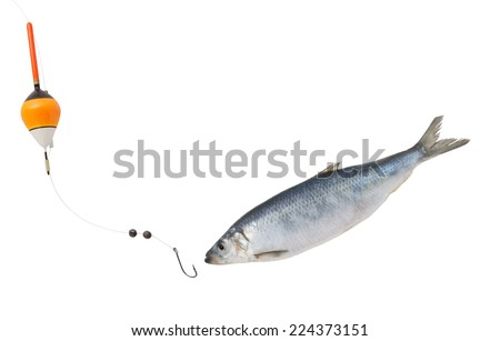 Fishing concept, fish hook and float with herring fish isolated on white - stock photo