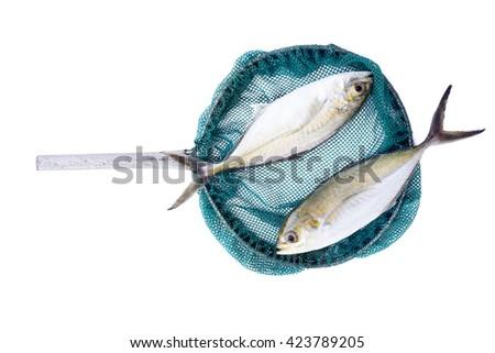 Fishing concept/fishing icon/fish in landing net/pompano scad fish/Jack fish/fishing tool - stock photo