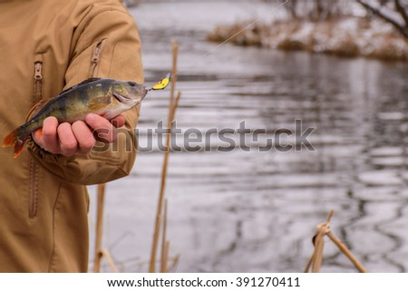 Fishing for perch. Fisherman on the river bank. Sport fishing. The caught fish. - stock photo