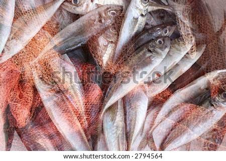 fishing net with fish - stock photo