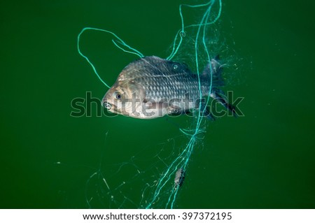 fishing nets with fish - stock photo