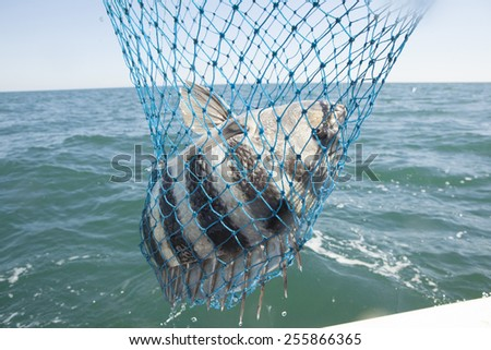 fishing off the boat in the ocean using a reel and a net - stock photo