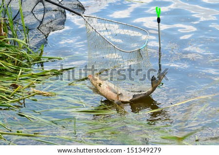 Fishing trophy in a net catching from river - stock photo