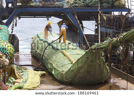 Fishing vessel. Great catch of fish in thrall. The process of casting the fish in the tank. Large freezer trawlers. - stock photo