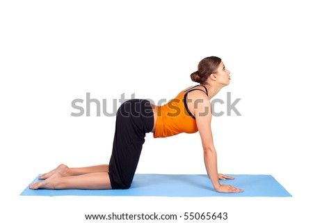 yoga cat stock images royaltyfree images  vectors