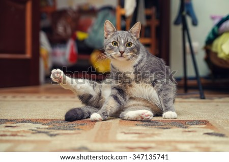 fitness cat sitting and to do exercise - stock photo