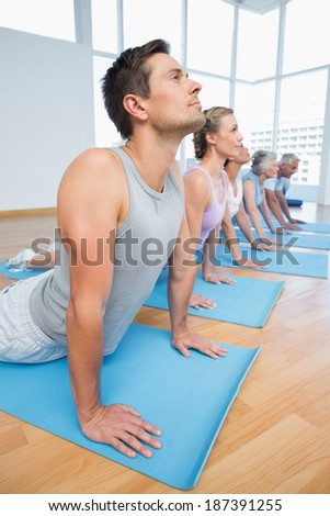 Fitness group doing cobra pose in row at the yoga class - stock photo