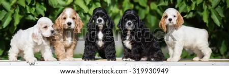 five adorable american cocker spaniel puppies - stock photo