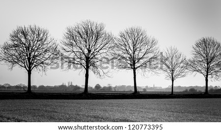 Five bare trees in a row at the edge of a small Dutch village. - stock photo