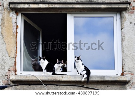 Five beautiful cats looking at the camera from a window sill - stock photo