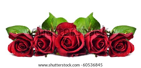 Five beautiful red roses on a pure white background with space for text