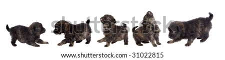 Five cute puppy dog brown on white background - stock photo