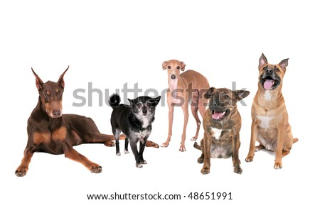 five different breed dogs sitting, standing or laying on a white background - stock photo