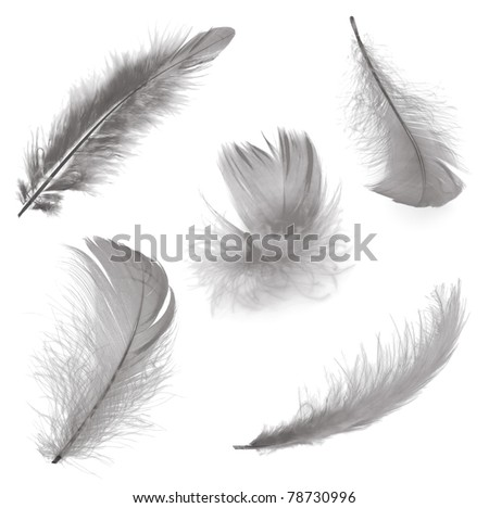 Five different feathers isolated on white background - stock photo