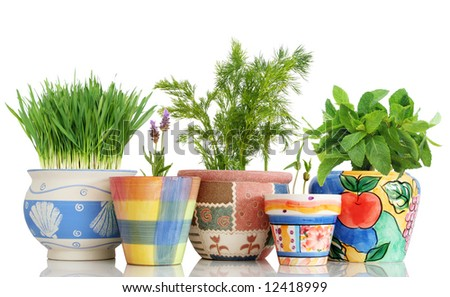 Five different herbs in colorful pots isolated on white - stock photo