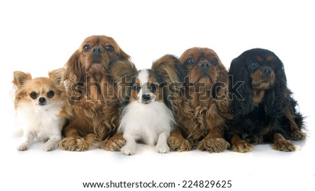 five dogs in front of white background