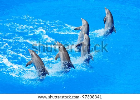 five dolphins playing in formation in the pool