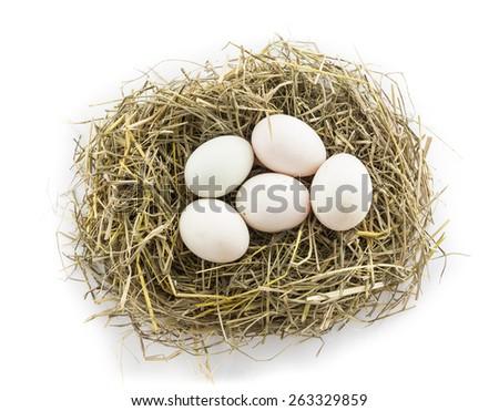 five duck egg in nest - stock photo